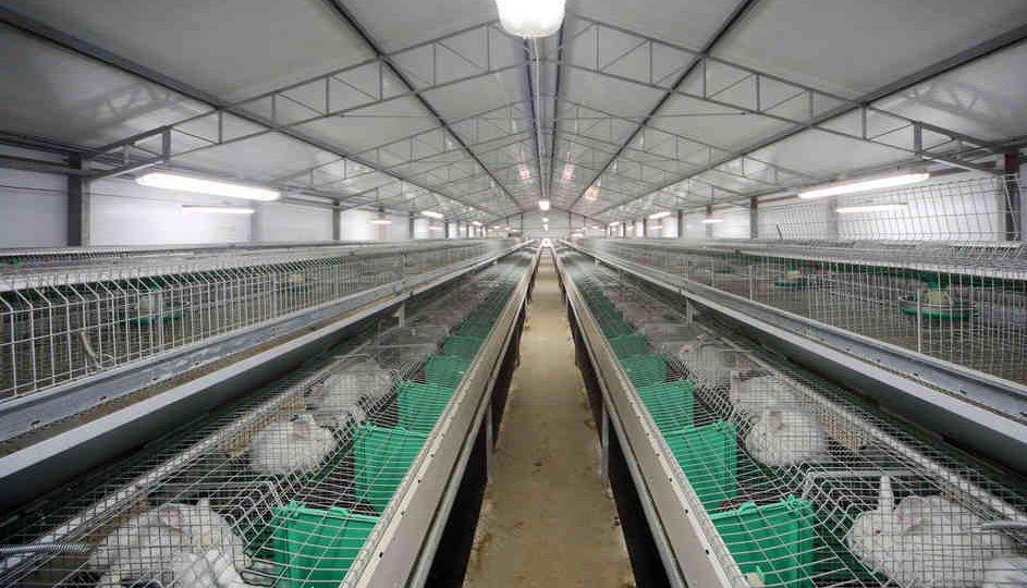 бизнес план кролиководческой фермы на 1000 голов