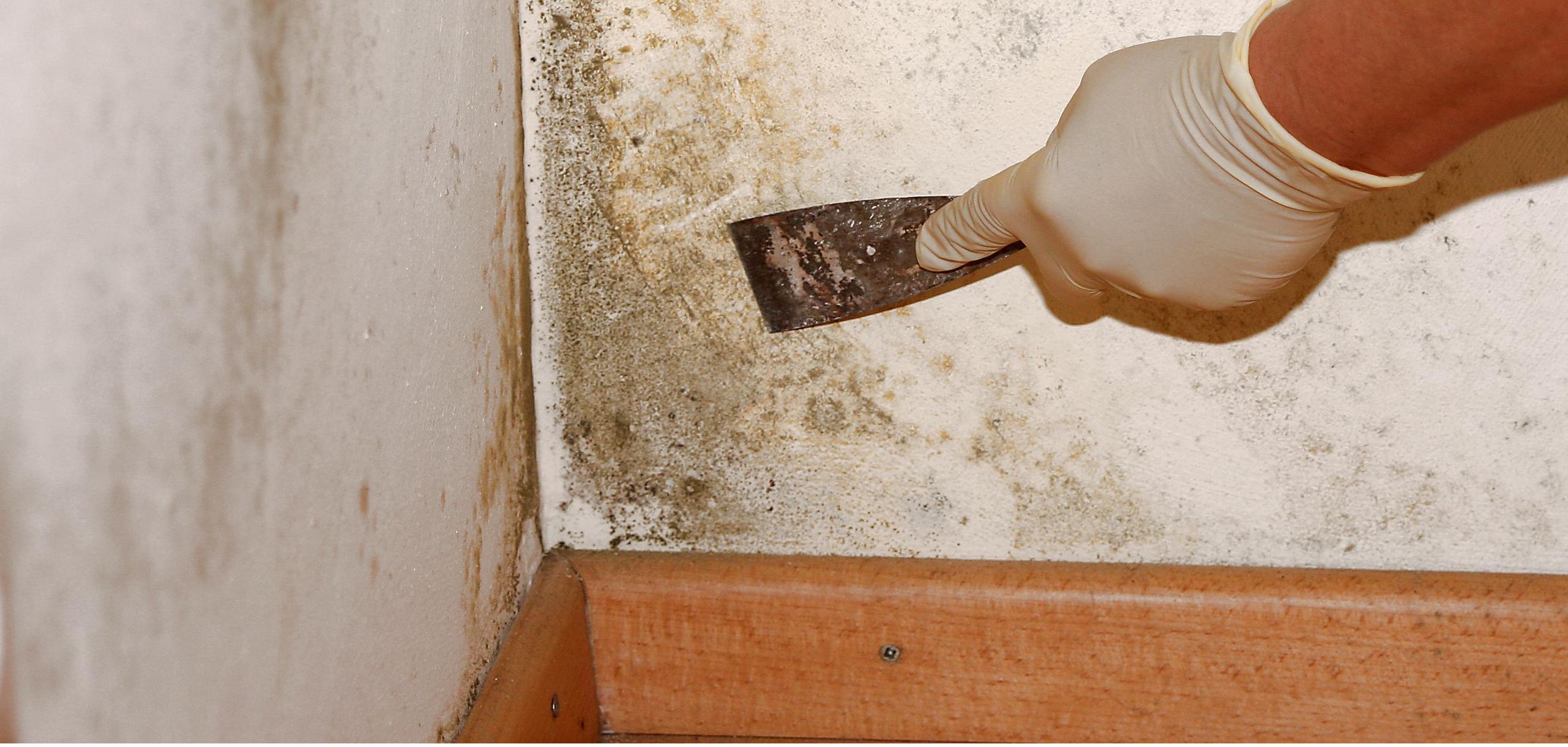 Как избавится от плесени на стенах своими руками